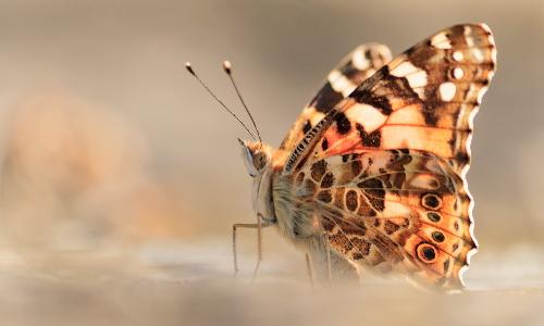 fbc60 kopieb Schmetterlinge im Naturpark