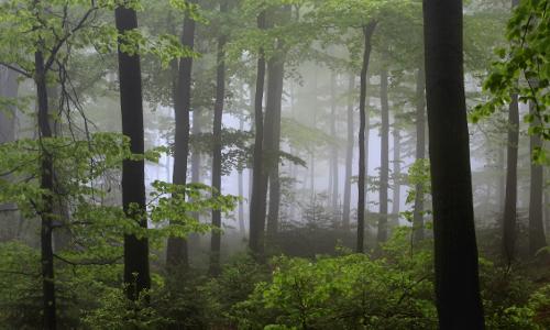 frhlings buchenwald im nebel stimm stamm hohes sauerland volkmar brockhaus B Heilkräfte des Waldes – Waldbaden in Naturparken