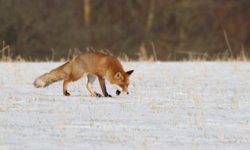 """fuchs 2 3 18b """"Winterhighlights"""" – Entdeckertage in Naturparken"""
