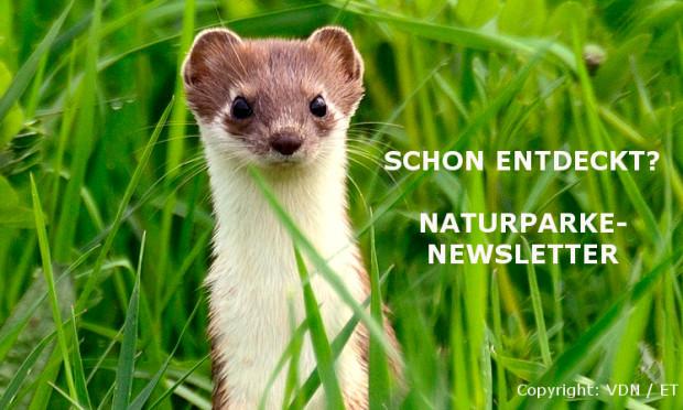 groes wiesel 2013 75849b 620x372 Anmeldung zum bundesweiten Newsletter
