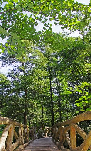 hdv 0111b Blätterwerk – Baumbestimmung leichtgemacht