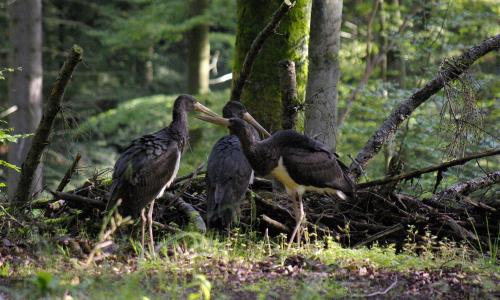 igp6425 Spannend und vielfältig – Naturpark Münden