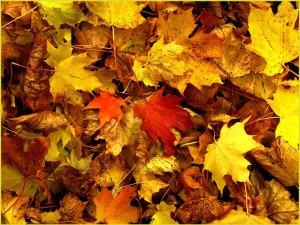 Herbstblätter inspirieren zum Basteln - Copyright: Kurt Sikora