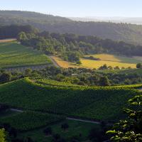 Wald Wiese Wein © VDN/Thalhäuser