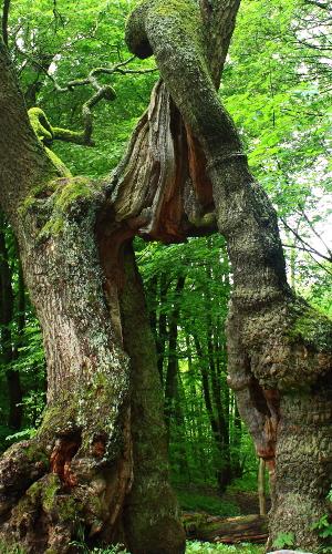 img 3630b B Naturpark Eichsfeld Hainich Werratal