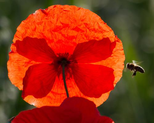"img 6754a beitrag ""Dufte Bienen"" – Bienenschutz in Naturparken"