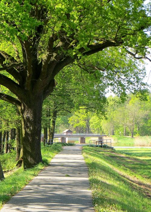 """img 8130 2 """"Im Wald und auf der Heide"""" – Naturpark Niederlausitzer Heidelandschaft"""