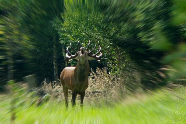 "imgp8896bb 620x415 ""FotoTipp"" – Fotografische Highlights in Naturparken"