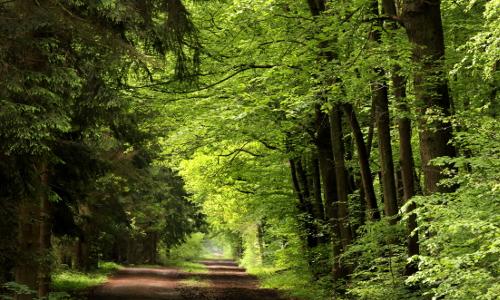 kottenforstimg 2 B Heilkräfte des Waldes – Waldbaden in Naturparken