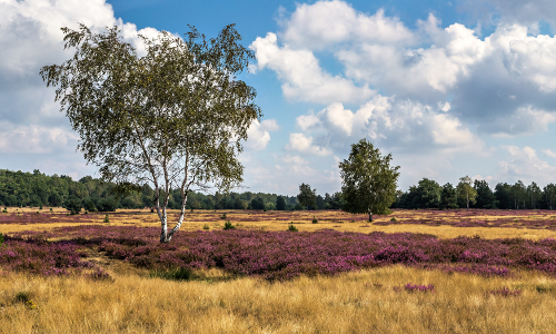 """landschaft043 a kraupa 29 08 15 mg 9756 2 """"Im Wald und auf der Heide"""" – Naturpark Niederlausitzer Heidelandschaft"""