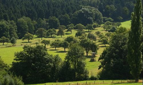 lieblingswiese passig gemachtb Sieben Berge und mehr – Naturpark Siebengebirge