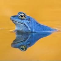 Blau vor Liebe © VDN/Thomas Hinsche