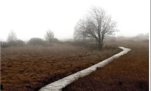 moorwegb Schaurig schön – Moorlandschaften in Naturparken