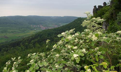 natur Huegel Mehlbeereb Naturpark Fränkische Schweiz – Frankenjura: von Natur aus schön