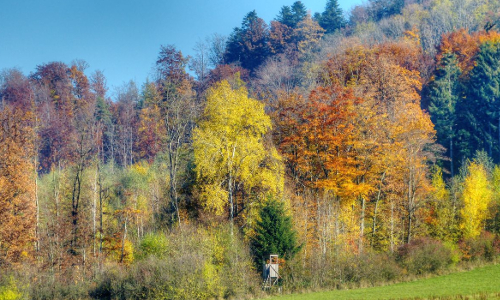 p2050185 6 7 tm2 npb Goldener Herbst – Waldspaziergang im Naturpark