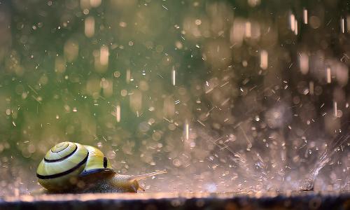 """schnecke im regen Beitrag Fotowettbewerb """"Augenblick Natur!"""" 2020"""