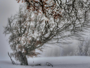 "Foto des Monats: ""Windbuchen"" - Copyright: VDN/Thomas Kaiser"