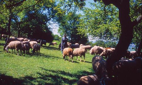zu 5 Schafhutungenb Von der Sonne verwöhnt – Naturpark Frankenhöhe