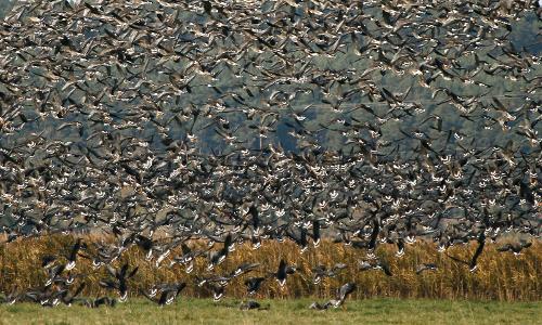 """zuviel beitrag """"Gute Reise!"""" – Vogelzugbeobachtungen in Naturparken"""