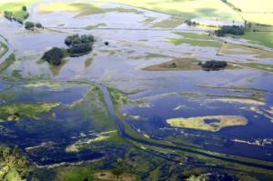 Überflutete Havelaue (F. Plücken LUGV)