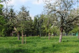 Baumblüten auf der Streubstwiese (NaturparkZentrum)