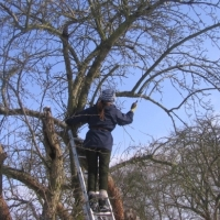 Baumschnitt (NaturparkZentrum Westhavelland)