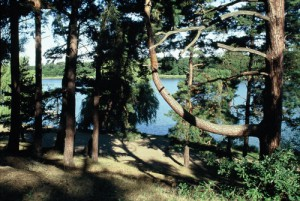 Blick auf den Hohennauener See (C. Rasmus)