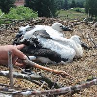 Der Blick in Adebars Nest