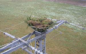 Gittermast mit Fischadlernisthilfe (Naturpark Westhavelland)