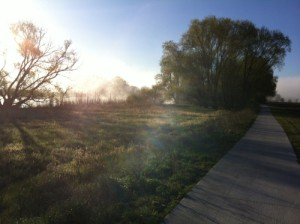 Havelradweg in der Morgensonne (Claudia Hesse)