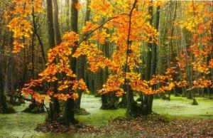 Herbstimpressionen (Naturpark Westhavelland)