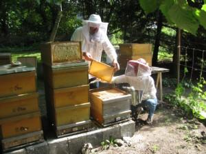 Honigernte (K. Batsch)