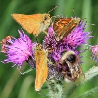 Insektenführung (Foto: Naturwacht Westhavelland)