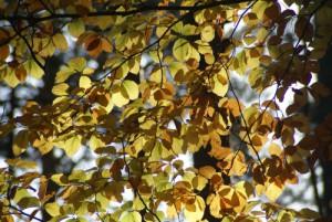 Blätter, Sabine Clausner