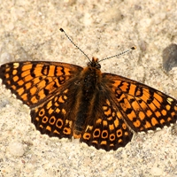 Schmetterling_Thomas Becker