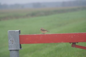 Vogelstimmenführung (Sabine Clausner)