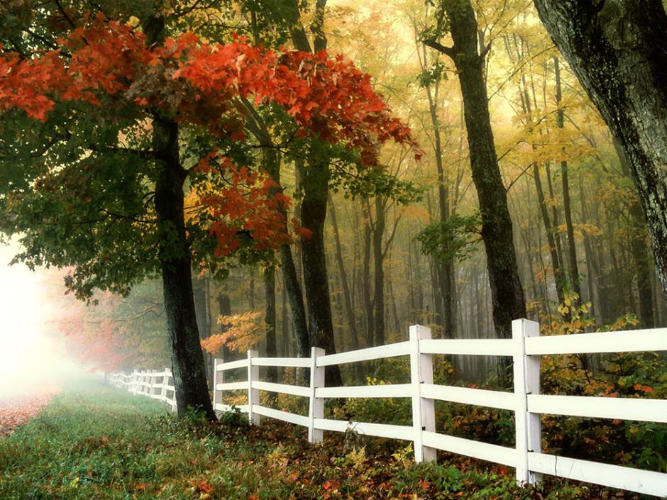 pexels pixabay 56617 kl 940x705 Tipps für Haus  und Hofbesitzer