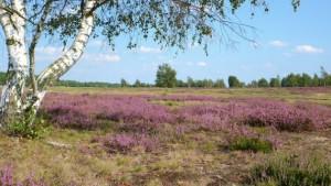 Heidelandschaft2